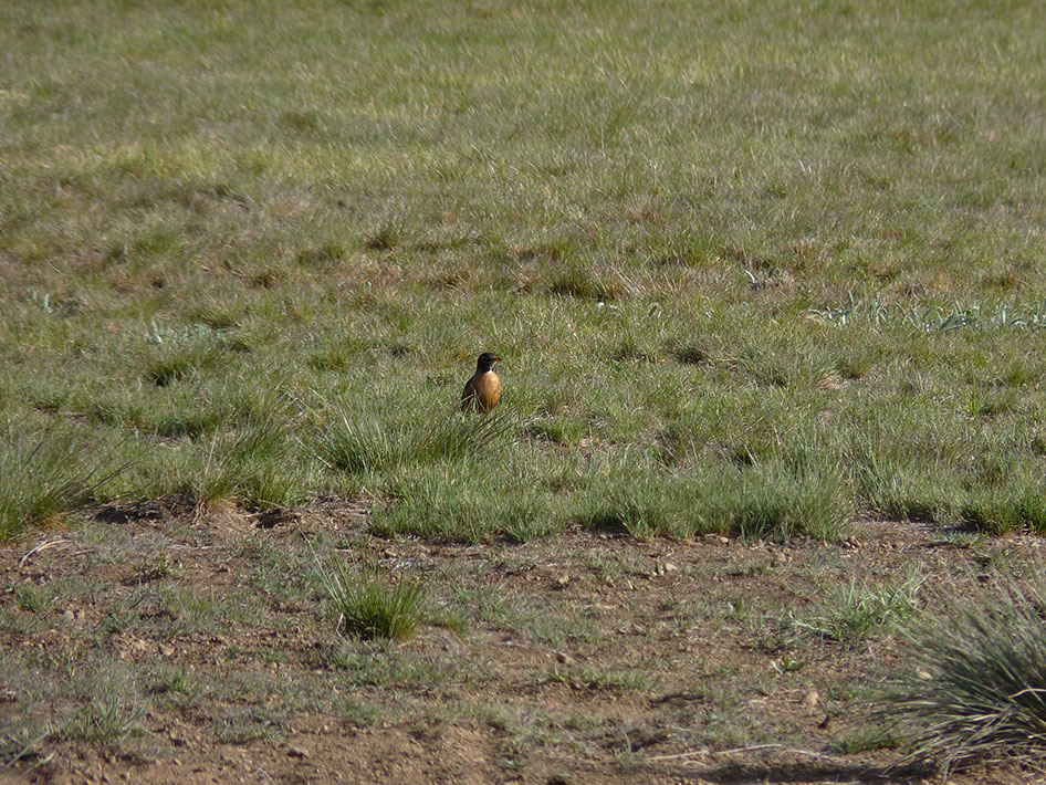 2015-04-22 Biology Bird Study